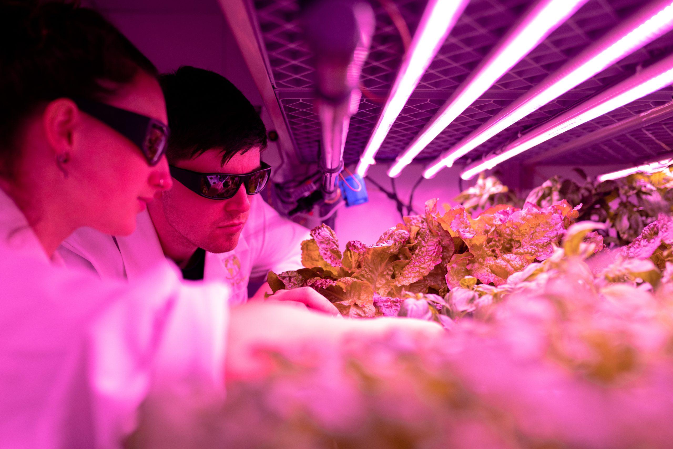 Alcimed-vertical-indoor-farming-niche-markets