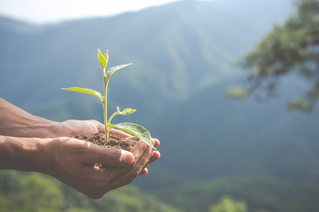carbon offsetting projects design - Programme de compensation carbone volontaire